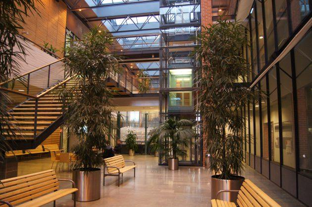 высшее образование в Финляндии по специальности международный бизнес в университете Аалто